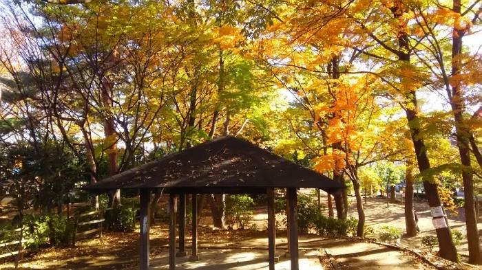 けやき公園紅葉