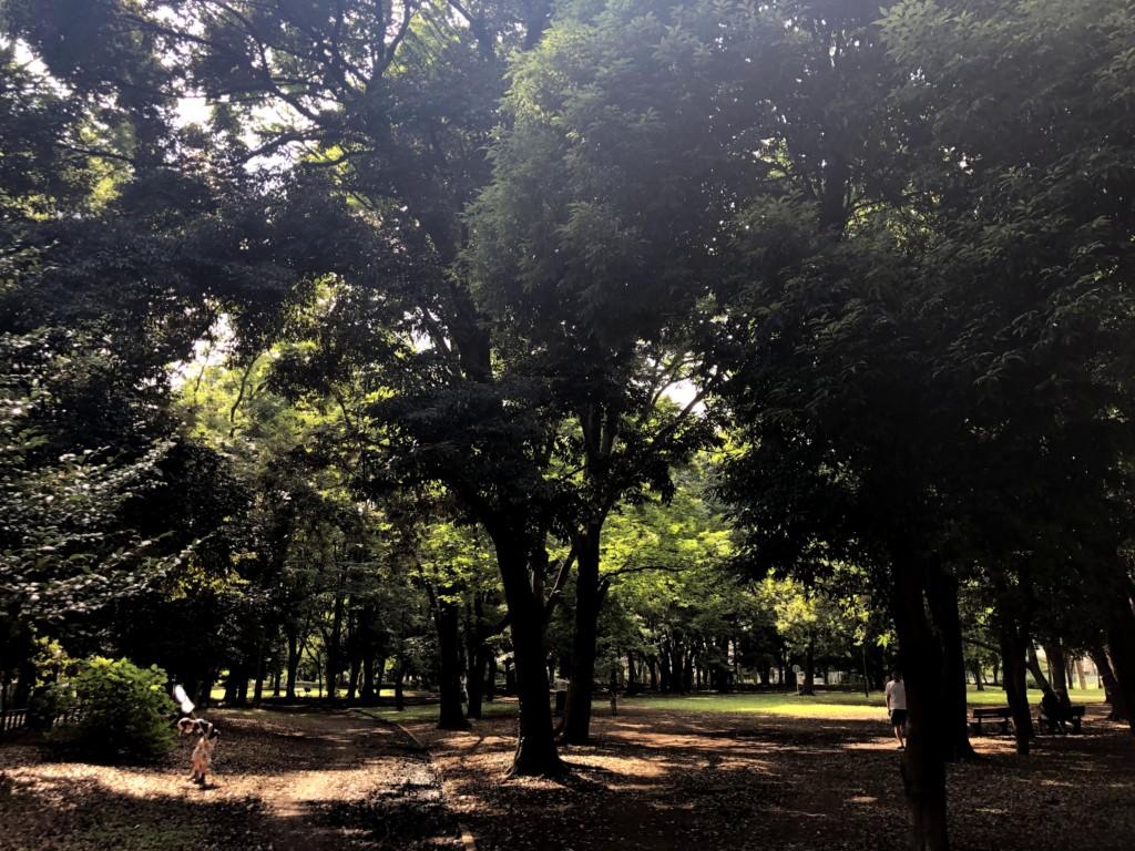 和田堀公園けやき広場