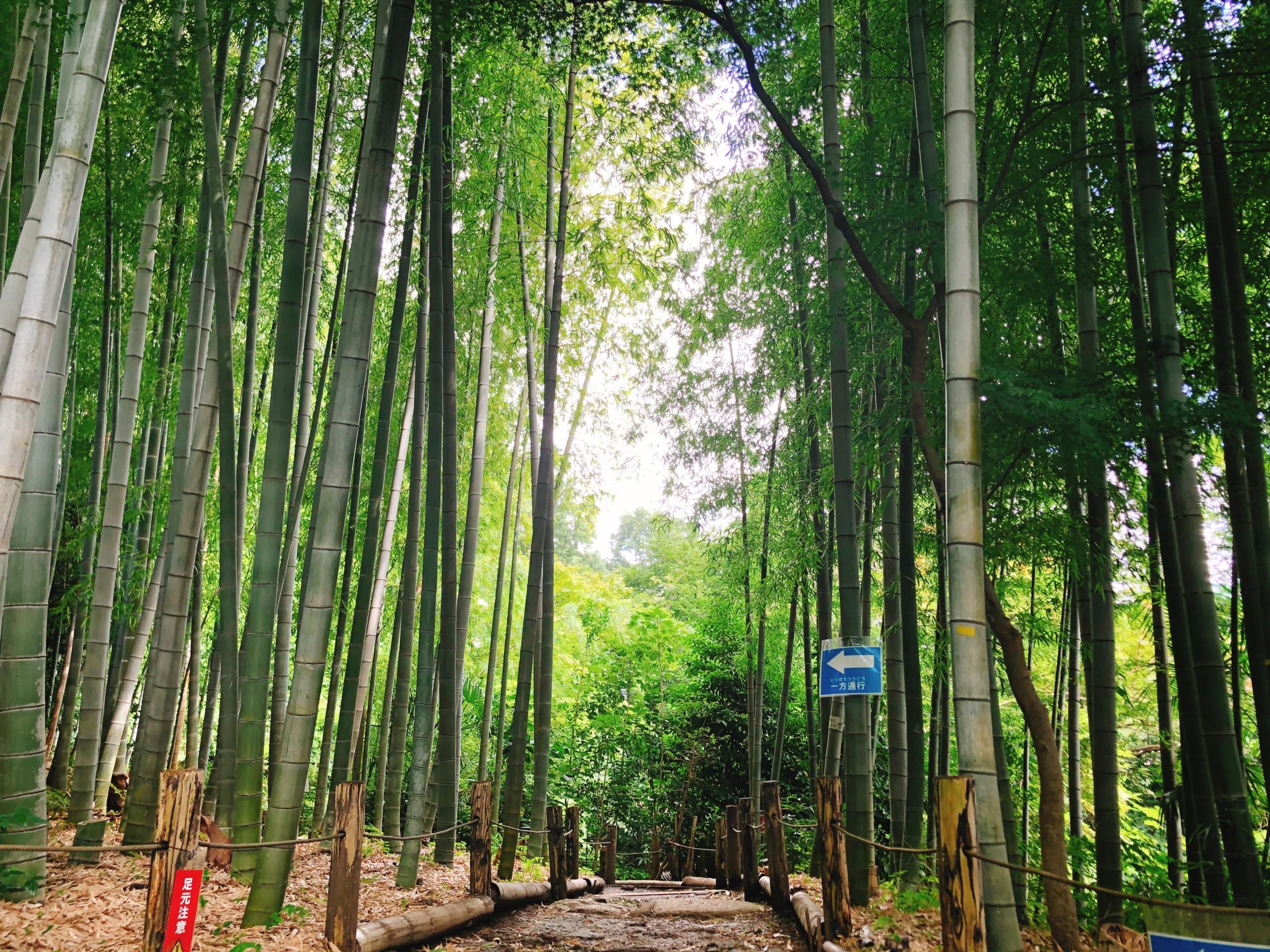 【仙川】武者小路実篤公園。昭和の文豪の手紙を読んで感じること。