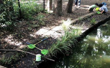【杉並】和田堀公園は釣りや虫捕りができる貴重な場所