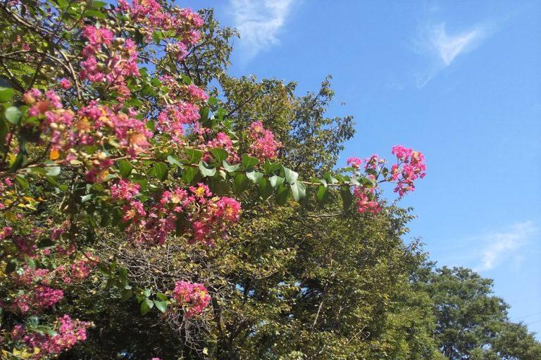 小金井公園の花