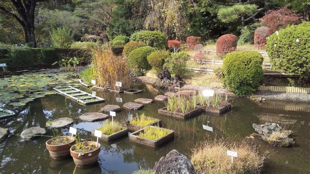 水生植物区