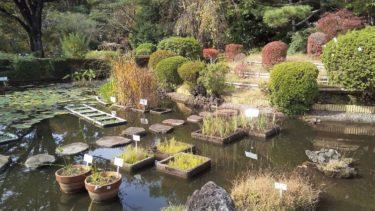 【小平】東京都薬用植物園で危険な植物を合法的に観察!