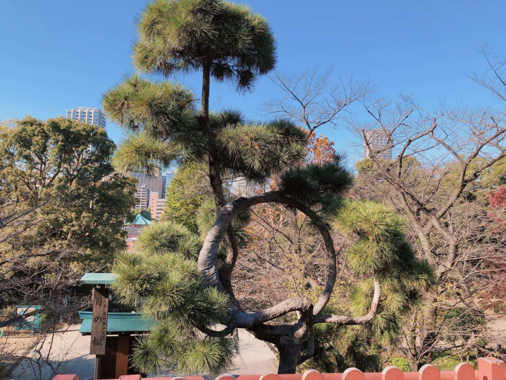 歌川広重月の松
