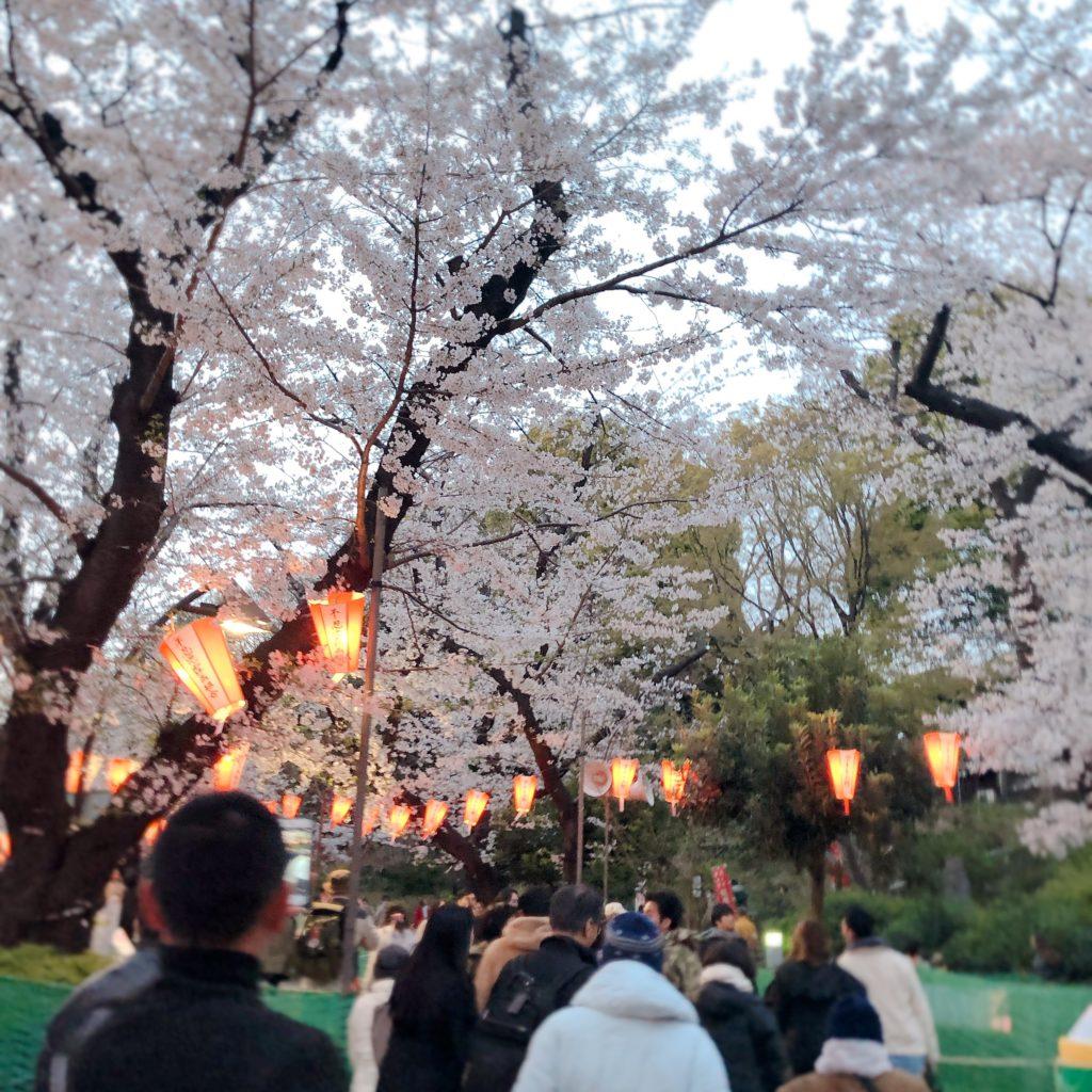 上野のお花見穴場スポット