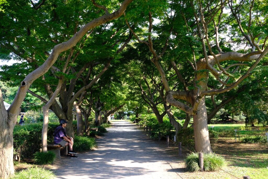 イロハモミジ並木